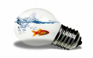 Photoshop___Fish_in_the_light_bulb_041647_