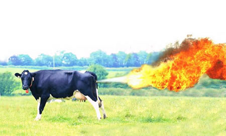 farting-cow