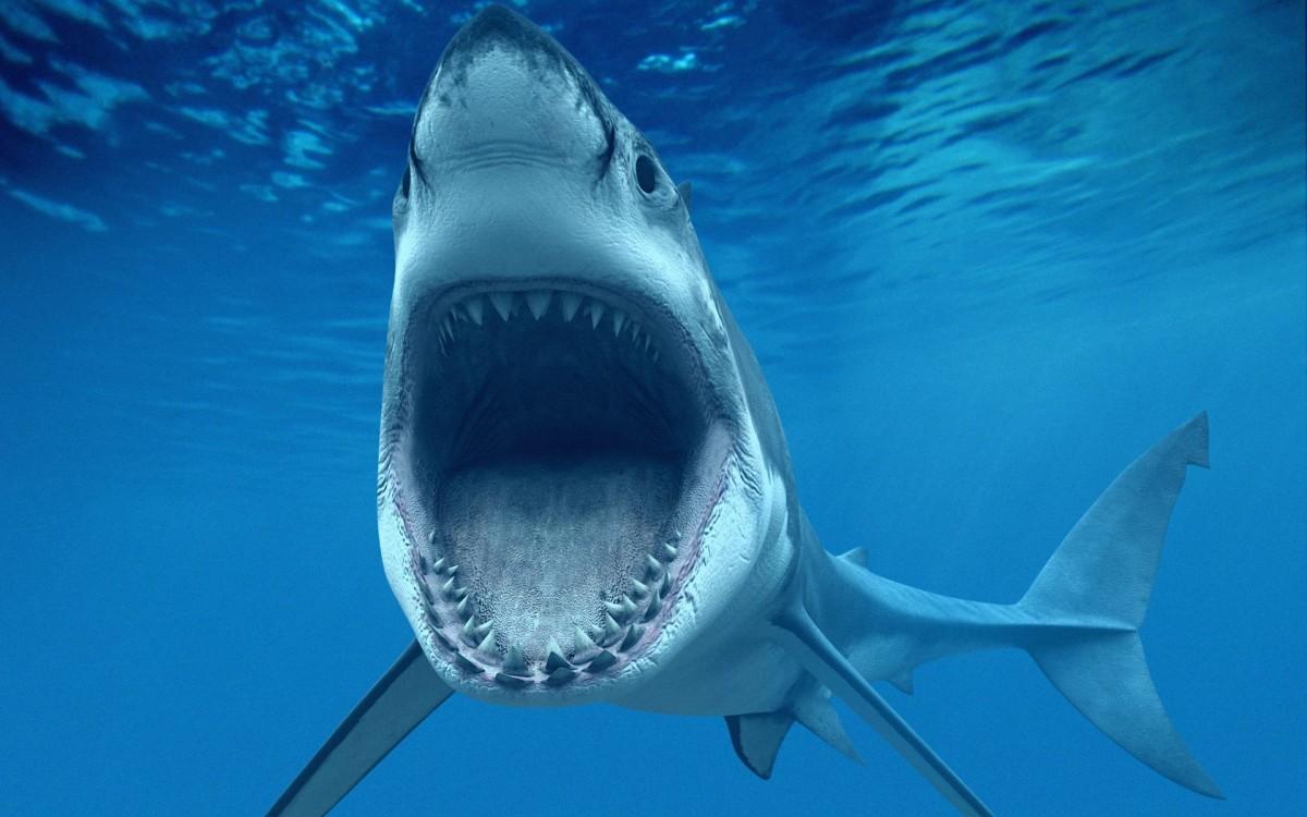 shark-jaws-wide-open