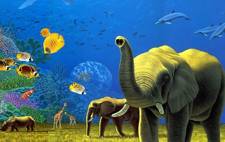 Animal_Kingdom_Wallpaper_mgoby
